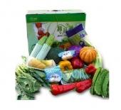 蔬菜节日装